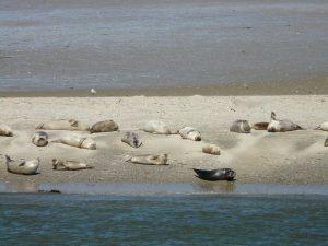 Von der Eider zu den Seehundbänken inkl. St.-Peter-Ording